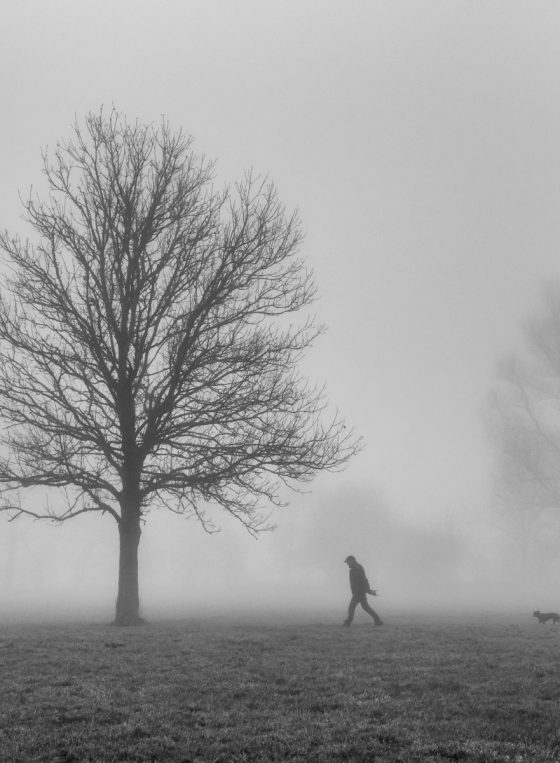 Foggy Walk